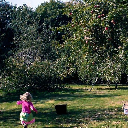 st-ives-cider-orchard